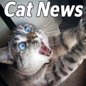 The Cat News icon