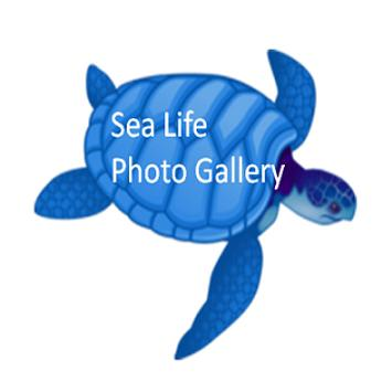SeaLife Photo Gallery poster