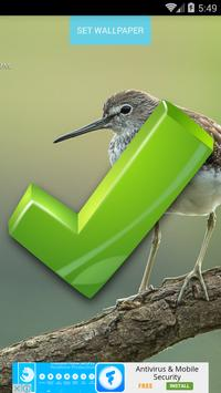 Bird Wallpapers screenshot 5