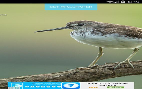 Bird Wallpapers screenshot 2