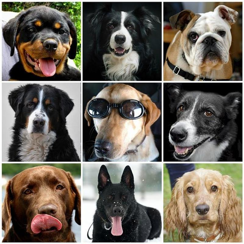 Talking dog app for android free download
