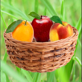 Fruit Catch icon