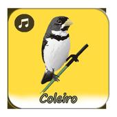 Canto De Coleiro A icon