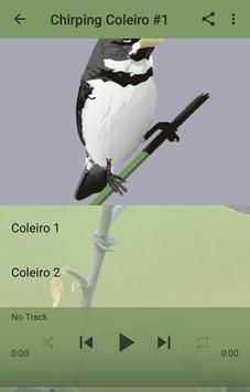 Canto De Coleiro A apk screenshot