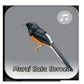 Kicau Murai Batu Borneo icon