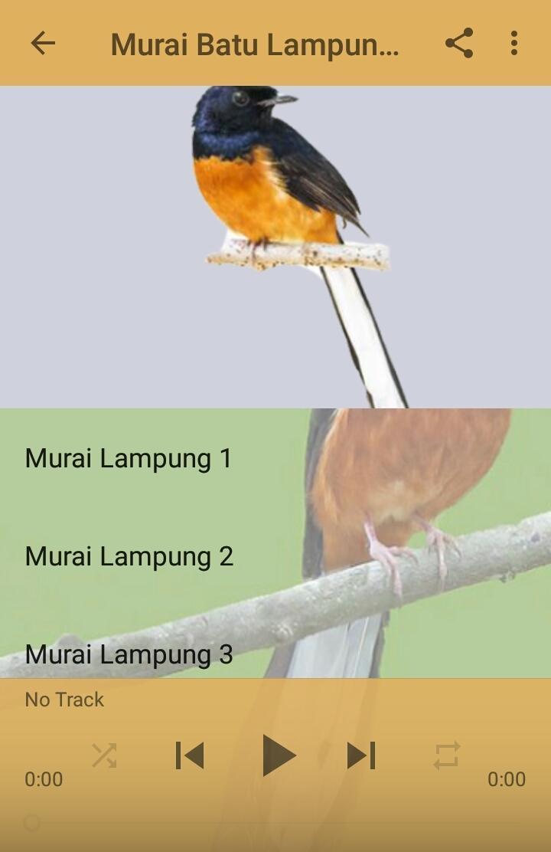Kicau Murai Batu Lampung For Android Apk Download