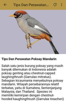 Kicau Poksay Mandarin Fighter apk screenshot
