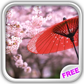 Sakura Flowers Live Wallpaper icon