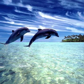 Wonderful Dolphins Water Touch poster