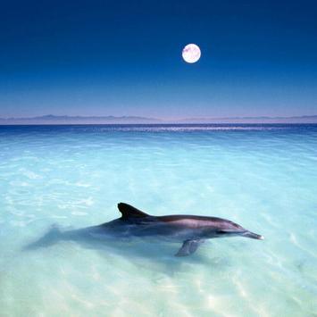 Wonderful Dolphins Water Touch apk screenshot