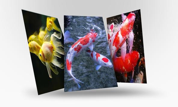 Lively Koi Fish 3D Theme Wallpapers screenshot 4