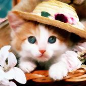 Moe Wallpaper - Kitty & Doggy icon