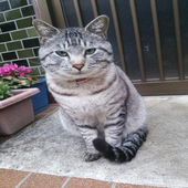 ネコさんにご挨拶 icon