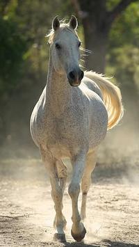 4K Horse Lockscreen poster