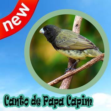 Canto De Papa Capim Mp3 poster