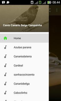 Canto Canario Belga Campainha poster