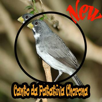 CANTOS DA PATATIVA CHORONA MP3 poster