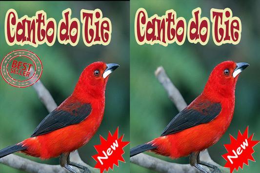 Cantos De Tiesangue Brazilios Mp3 apk screenshot