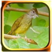 Kicau Burung Cucak Jenggot icon