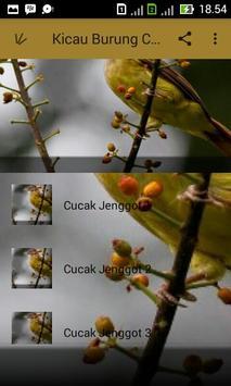 Kicau Burung Cucak Jenggot apk screenshot