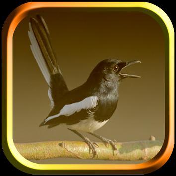 Kicau Burung Kacer screenshot 4