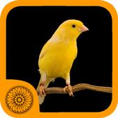 Malika Bird Farm icon