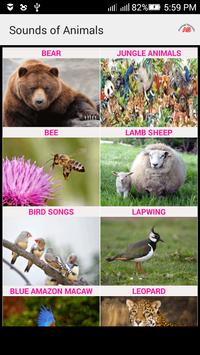 Sounds of Animals and Birds poster