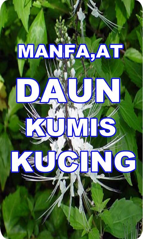 Manfaat Daun Kumis Kucing For Android Apk Download