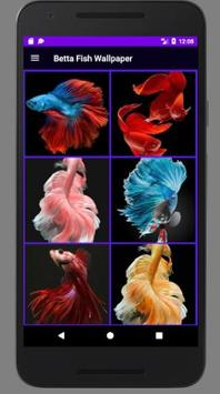 Betta Fish Wallpaper HD Collections poster