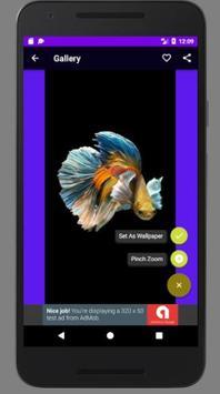 Betta Fish Wallpaper HD Collections screenshot 1