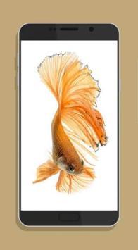Betta Fish Wallpaper HD Collections screenshot 3