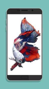 Betta Fish Wallpaper HD Collections screenshot 4