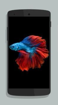 Betta Fish Wallpaper HD Collections screenshot 5