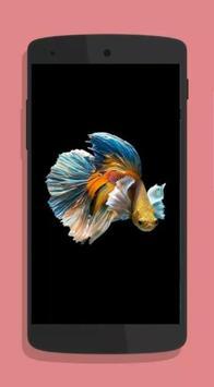 Betta Fish Wallpaper HD Collections screenshot 6