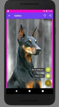 Dog Wallpaper screenshot 1