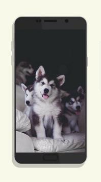 Dog Wallpaper screenshot 4