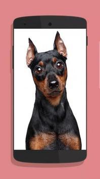 Dog Wallpaper screenshot 6