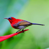 Birds Wallpapers icon
