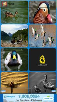 Duck Wallpapers apk screenshot