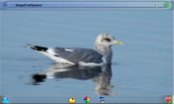 Seagull Wallpapers screenshot 3