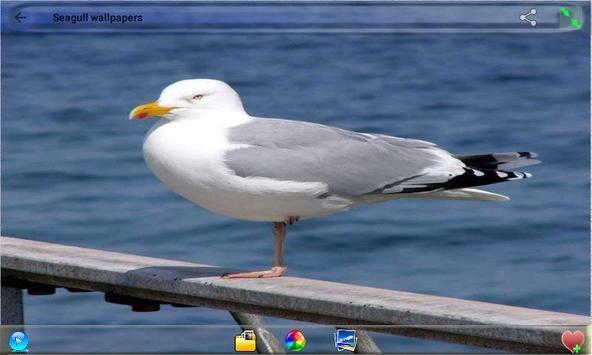 Seagull Wallpapers screenshot 4