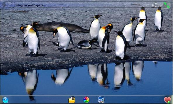 Penguin  Wallpapers screenshot 3