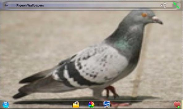 Pigeon Wallpapers poster