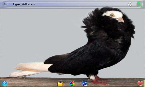 Pigeon Wallpapers screenshot 1
