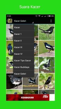 Suara Burung Kacer Pilihan screenshot 3