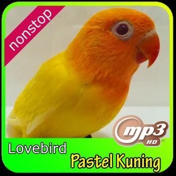 Masteran kicau love bird pastel kuning poster