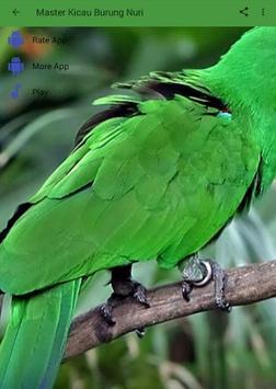 Master Kicau Burung Nuri apk screenshot