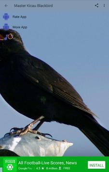Master Kicau Burung Blackbird apk screenshot