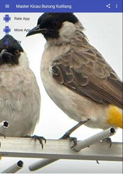 Master Kicau Burung Kutilang apk screenshot