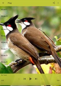 Kicau Burung Kutilang Jambul apk screenshot